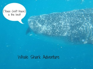{Texas Craft House} Whale Shark Adventure